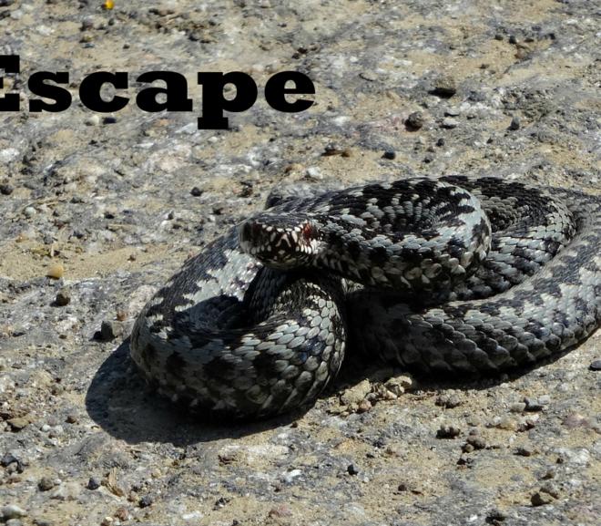 Escape: A Micro Story
