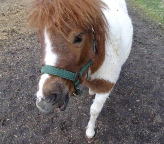 Speedy: An Equine Limerick