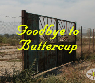 Goodbye to Buttercup: A Fifty Word Story
