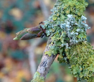 A Lichen a Day — 14 December