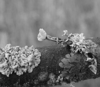 A Lichen a Day — 1 December 2020