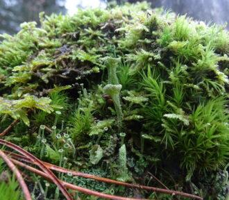 A Lichen a Day — 13 December