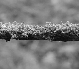 A Lichen a Day — 16 December 2020
