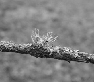 A Lichen a Day — 15 December