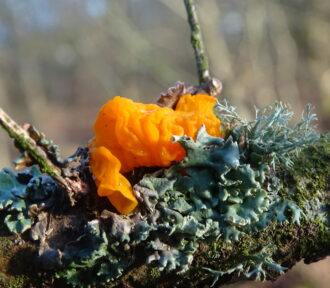 A Lichen a Day — 20 December