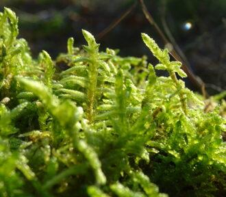A Lichen (or Moss) a Day — 23 December