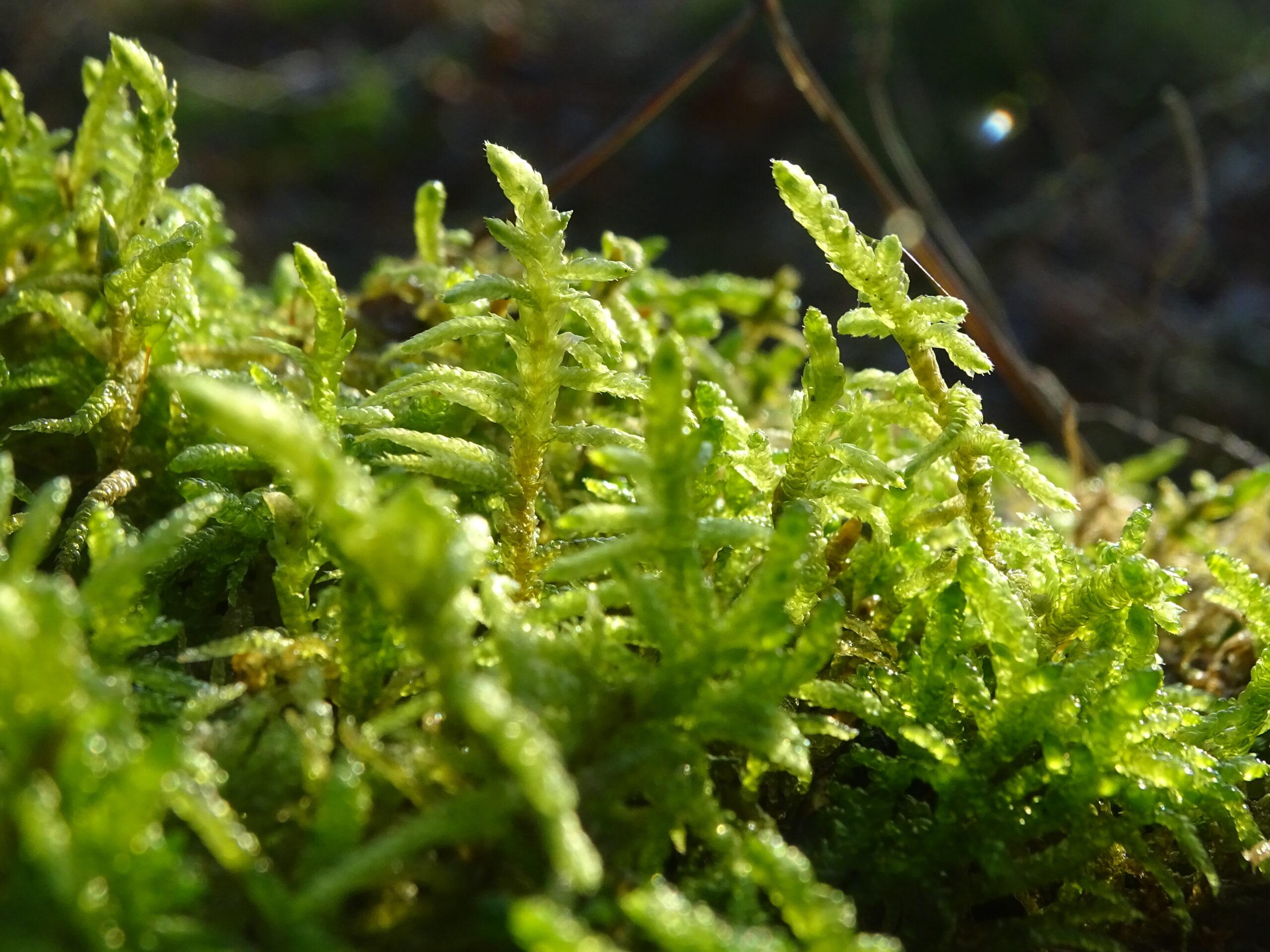 close-up of sun on moss