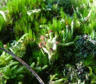 A Lichen a Day — 22 December